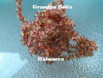 Candy Chenille - Habanero #C09 - 3 Yard Package
