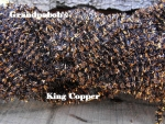 Candy Chenille - King Copper  #C01 - 72 Yard Skein